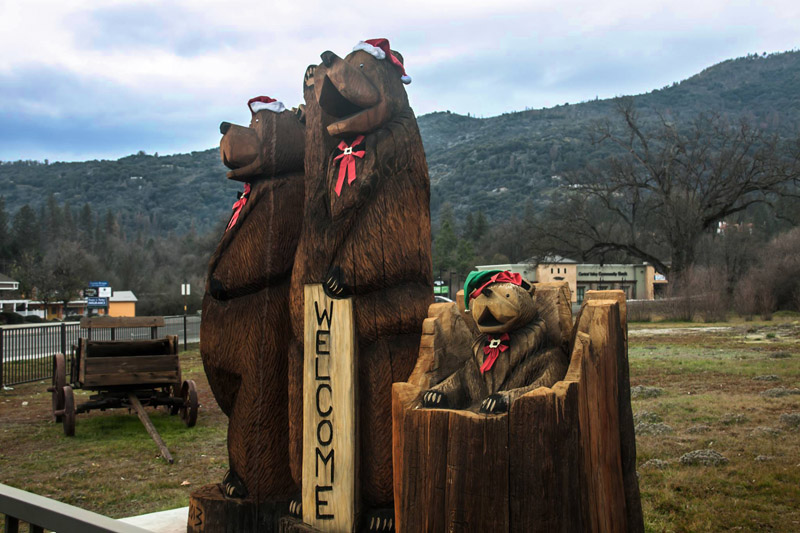 Bears in Oakhurst, California